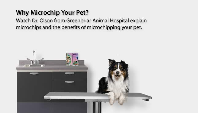 Microchipping 101